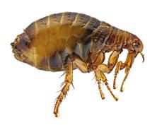 Parazité nikdy nespí. Jste na ně připraveni?