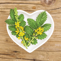 Hemeroidy - léčba a prevence