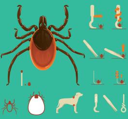 Proč je ochrana před klíšťaty pomocí účinných antiparazitárních přípravků tak důležitá?