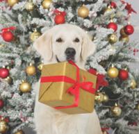 Nezapomeňte o vánocích na své zvířecí miláčky!