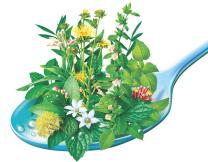 Léčivé byliny