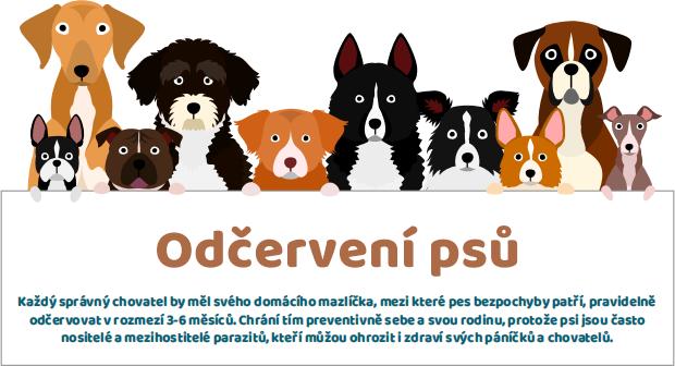 Odčervení psů