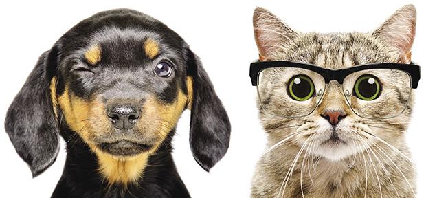 """Kočičí pohled a """"psí oči"""""""