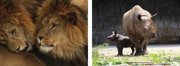Safari Park ve Dvoře Králové