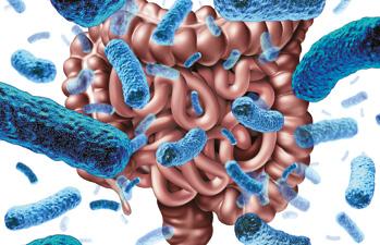 Přátelské bakterie - probiotika