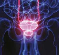 Muži: prostata